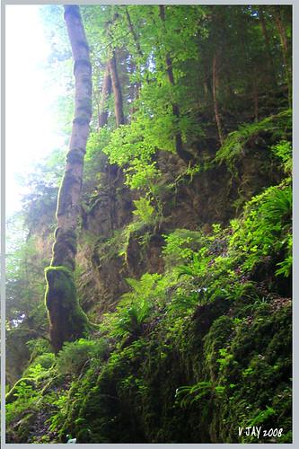 Gorges du Pont du Diable /LA VERNAZ 74 / Grass