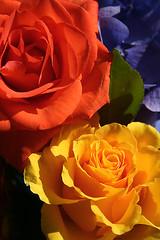 Bright bouquet (Juli's pix) Tags: flowers floral bouquet soe colorfulflowers brightbouquet