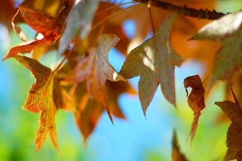 """""""How beautifully leaves growold. How full of lightand color are their last days."""""""