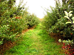 Fantasy Land (veronica.marie.) Tags: trees nature leaves way path ground fantasy land apples