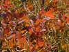 erba e foglie
