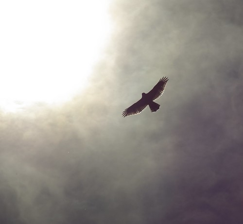 Soaring into the Sun by CBou on Flickr Courtesy of Creative Commons License