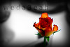 بس... أحبكـ (ًWeda3eah*) Tags: orange white black flower love dinner you qatar weda3eah