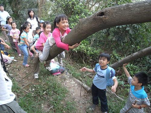 你拍攝的 27猴子上樹。