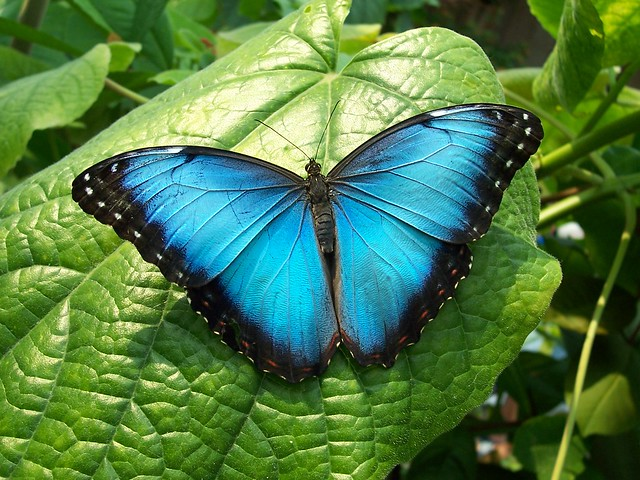 Did you know Beautiful Blue Colored Animals