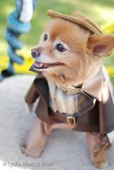 Haute Dog-19 (fotonomous) Tags: dogs halloween losangeles costume nikon kitsch longbeach rescuedogs nikon50mmf18 d80 lydiamarcus fotonomous httpfotonomousblogspotcom wwwlydiamarcuscom hautedoghowloween wwwhautedogsorg