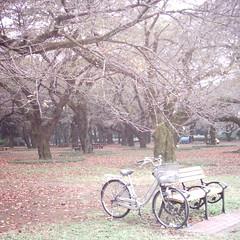 Bicycle (MiniDigi)