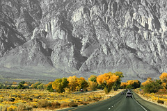 Rollin', rollin', rollin' (Beefus) Tags: california autumn tree fall yellow cottonwood hwy395 orton owensvalley rawhide 395 easternsierras us395 shotfromamovingvehicle loscarayos