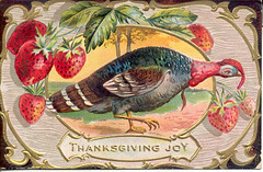 Vintage Thanksgiving postcard Turkey with strawberries