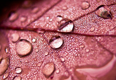 Experience teaches slowly and at the cost of mistakes (bynini [slightly away]) Tags: pink autumn leaves forest droplets leaf drops bokeh drop jewels makro naturesfinest goldstaraward multimegashot vosplusbellesphotos