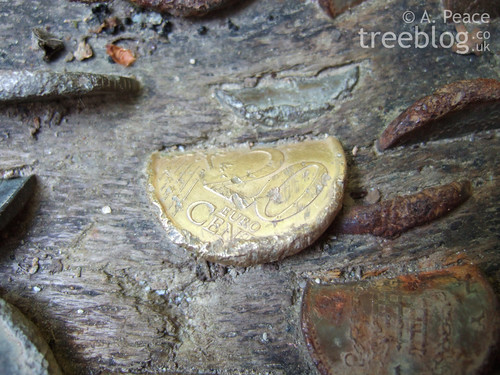 twenty euro cents coin embedded in wood