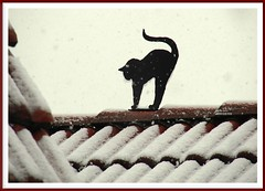 Winter in der Wetterau (Jorbasa Mwa) Tags: winter pet animal cat deutschland hessen katze dachziegel gemany tier wetterau schwarzekatze jorbasa