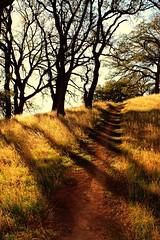 Crossing Paths (CLCsPics) Tags: landscapesshotinportraitformat