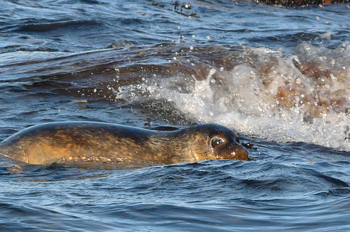 Seal release 09dec08