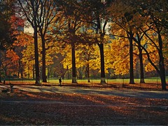 Good-Bye Autumn (jami_lee) Tags: nyc autumn trees shadow orange brown fall leaves yellow season centralpark bulidings damniwishidtakenthat