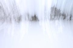 kinematic (-Antoine-) Tags: park trees winter white snow canada motion blur tree nature forest movement blurry quebec jan quote snowy hiver north sigma arbres motionblur québec invierno nordic neige 1020mm 2008 1020 foret arbre parc blanc saguenay gauthier forêt nord flou mouvement chicoutimi boreal citation taiga bougé wintery nordique sigma1020mm boreale boréale boréal bouge kinematic sigma1020 taïga rosaire hivernal rosairegauthier borealie saguenaylacstjean cinématique saguenaylacsaintjean sverak qužbec borealia nordicite nordicity rosairegaut0011 svěrák ©antoinerouleau