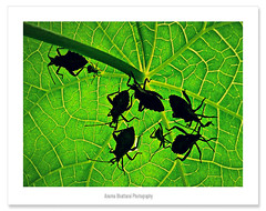 Group Discussion !! (Anuma S. Bhattarai) Tags: nepal green nature leaves bug garden leaf group bugs k