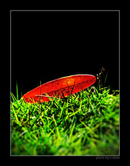 lonely leaf (e.nhan) Tags: flowers light black flower green art nature leaves closeup landscape leaf colorful colours dof bokeh arts backlighting enhan galleryoffantasticshots