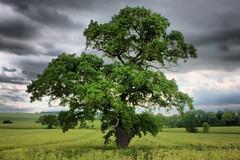 IMG_0780HDR (chrisgandy2001) Tags: tree field landscape hdr highdynamicrange warwickshire