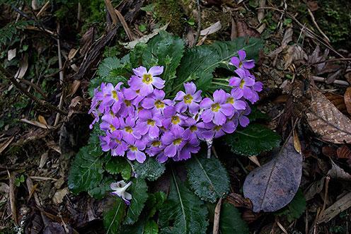 Wild flowers in Eaglenest