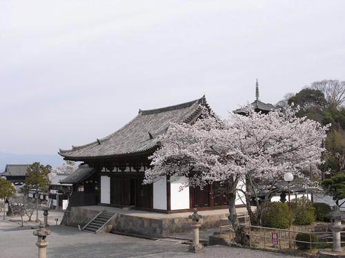 当麻寺(桜)-02