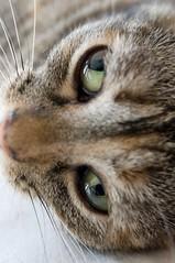Ok, it's a lens.  Go away. (debunix) Tags: cat pc emily 24mm