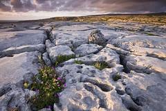 The Burren, Co. Clare (Dulaman) Tags: ireland sunset seascape nature rock landscape clare limestone moonscape specnature