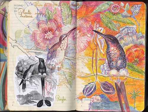 oiseau_lyre_