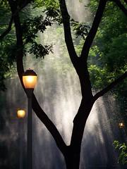 Summer Afternoon (KaDeWeGirl) Tags: park newyorkcity sun tree fountain leaves lights bronx rays lamps supershot diamondclassphotographer flickrdiamond