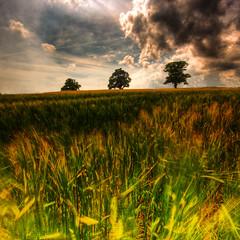 _____I_I__I___ | HDR (u n c o m m o n) Tags: 3 tree grass clouds rural 350d mosaic canon350d frontpage hdr sterlen lucisart lucis ystad uncommon 500x500 photomatix sigma1020 tonemapped 3exp landscapeset marcusclaesson