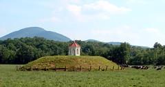 Indian mound in pasture, near Helen, Georgia (Martin LaBar) Tags: georgia indian nativeamerican mound pasture cows landscape nacoochee cherokee a1f1 desoto earthworks yonahmountain indianmound