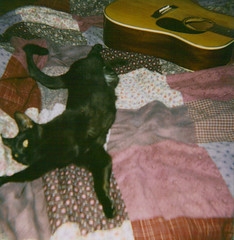 (ChristinaBrown) Tags: black cute cat polaroid eyes quilt guitar 600 layla