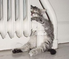 Radiator Kitty