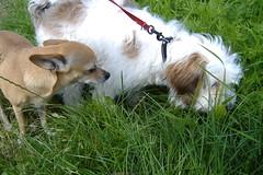 Daisy and Kruimeltje (Hanna Helena1) Tags: dog cute dogs daisy kruimeltje