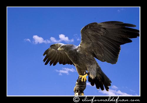 Aguila sin libertad