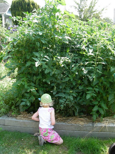 Peeking under the tall tomatoes