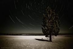 Desolation (desaturated)... (After Dark Photo) Tags: california longexposure nightphotography pinetree shadows desert nevada fullmoon astronomy nightsky startrails highway120 easternsierra monolakeworkshop2008