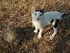Kätzchen Fluse (klaus_liebich) Tags: katzen ouranoupolis fluse