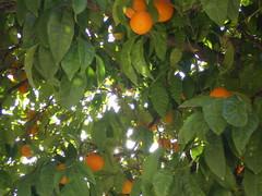 Greece 07 #4 (tt64jp) Tags: light orange tree europe european ray hellas athens greece grce agora  attica     romanagora    attik