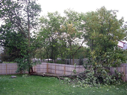 Fallen Tree in My Backyard