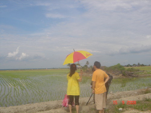 Shooting the paddy field scenery