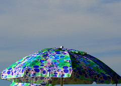 umbrellla (SusanCK) Tags: blue sky green umbrella colorful sunny susancksphoto