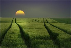 It_is_a_long_way (Massimo Valiani) Tags: sunset field way hope circles grain soul creativecommons anima attempt strenght forgive newvision peregrino27newvision