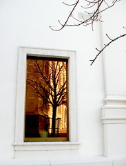 When the World's Black&White let the Color come from Your Mind (Megyarsh) Tags: orange white color reflection tree blanco window wall ventana branches reflejo rbol imagination naranja ramas soliloquio ltytr1 fotocompetitionbronze