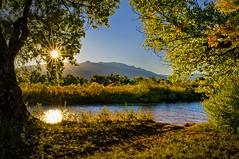 Bosque Morning (Kevin Eddy) Tags: autumn fall sunrise river albuquerque bosque nm riogranderiver goldenglobe top20nm