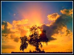 Tree and sun with sky great colours (Joachim Alljes) Tags: justclouds