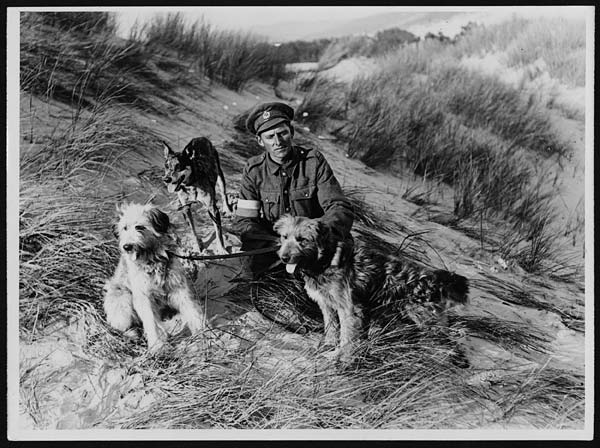 British messenger dogs with their handler, France, during World War I