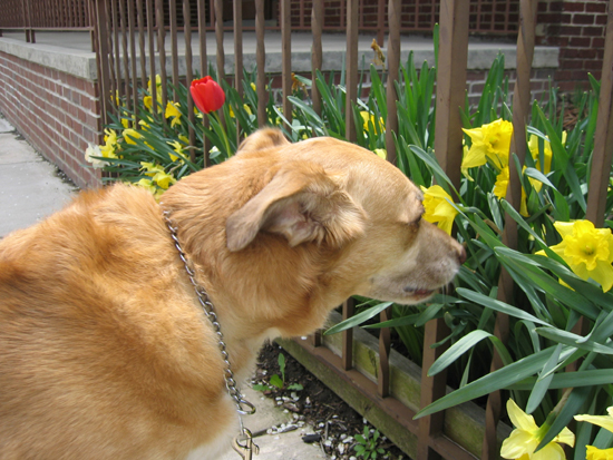 Una Sniffs Flowers (Click to enlarge)