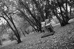chairs (jolenetara) Tags: autumn trees fall leaves chairs greyscale nikond40x