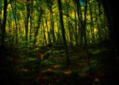 La Fageda d'en Jord (XIII) (Jose Luis Mieza Photography) Tags: espaa tree forest landscape arbol spain paisaje catalonia bosque catalunya catalua haya garrotxa bosc cubism olot themoulinrouge hayedo firstquality benquerencia flickrshop falleda golddragon reinante platinumphoto anawesomeshot jlmieza lafalledadenjorda reinanteelpintordefuego joseluismieza